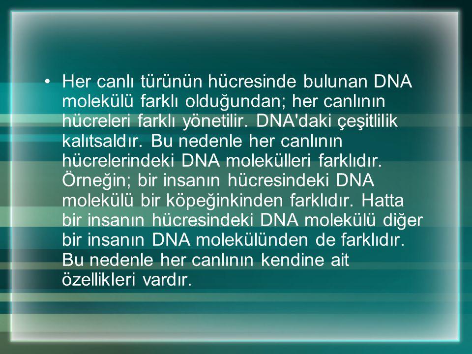 Her canlı türünün hücresinde bulunan DNA molekülü farklı olduğundan; her canlının hücreleri farklı yönetilir.