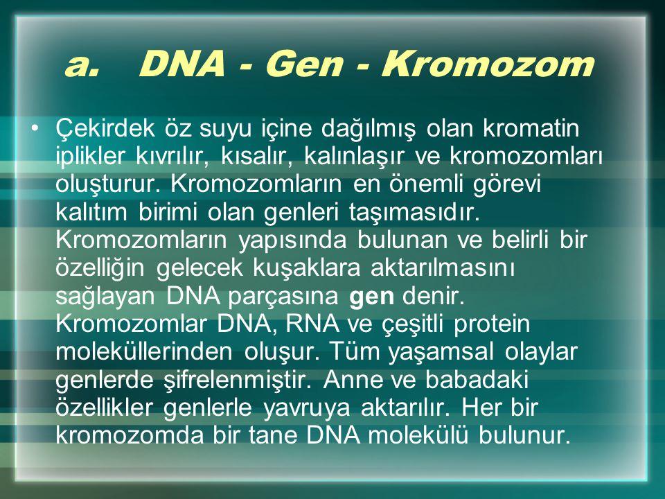 a. DNA - Gen - Kromozom