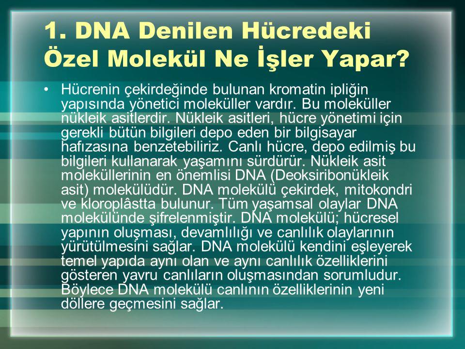 1. DNA Denilen Hücredeki Özel Molekül Ne İşler Yapar