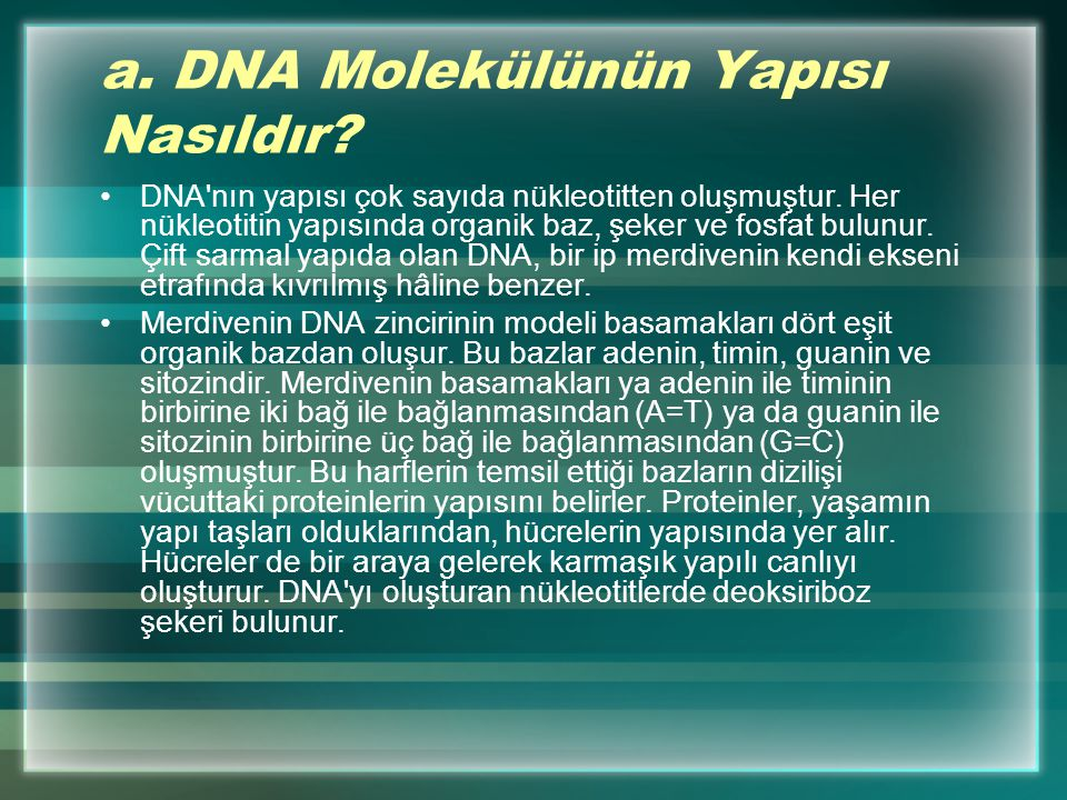 a. DNA Molekülünün Yapısı Nasıldır