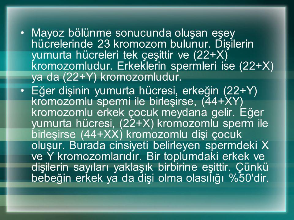 Mayoz bölünme sonucunda oluşan eşey hücrelerinde 23 kromozom bulunur