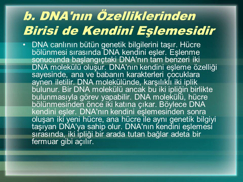 b. DNA nın Özelliklerinden Birisi de Kendini Eşlemesidir