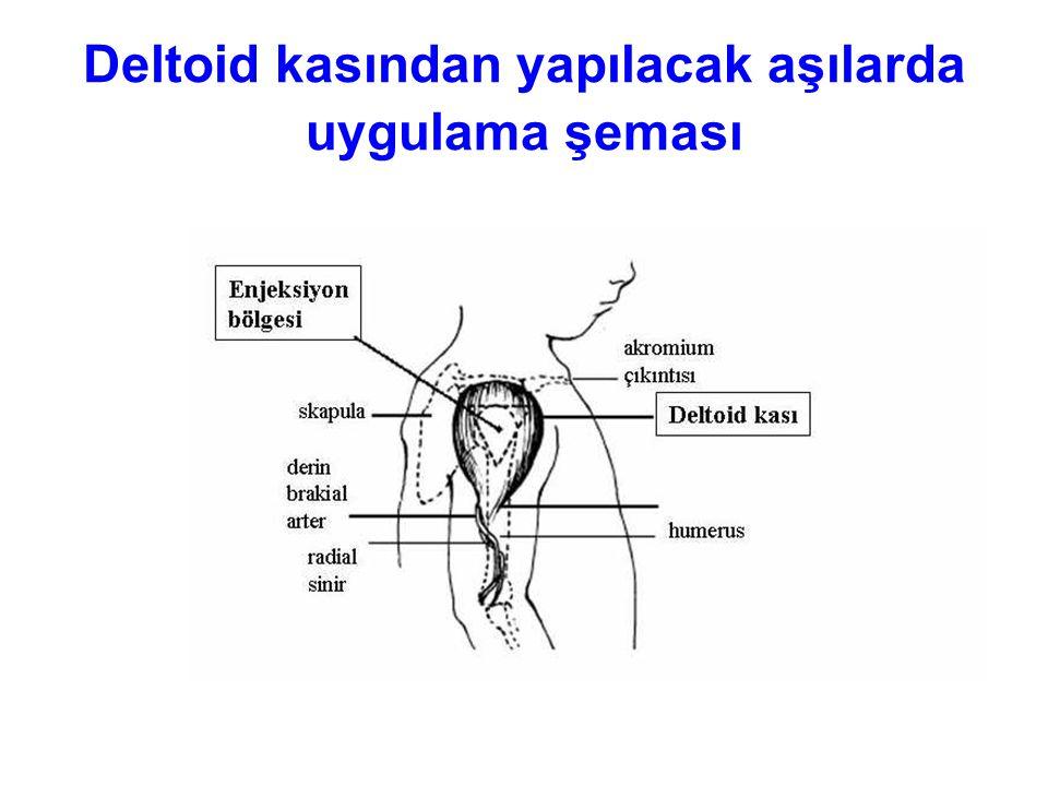 Deltoid kasından yapılacak aşılarda uygulama şeması