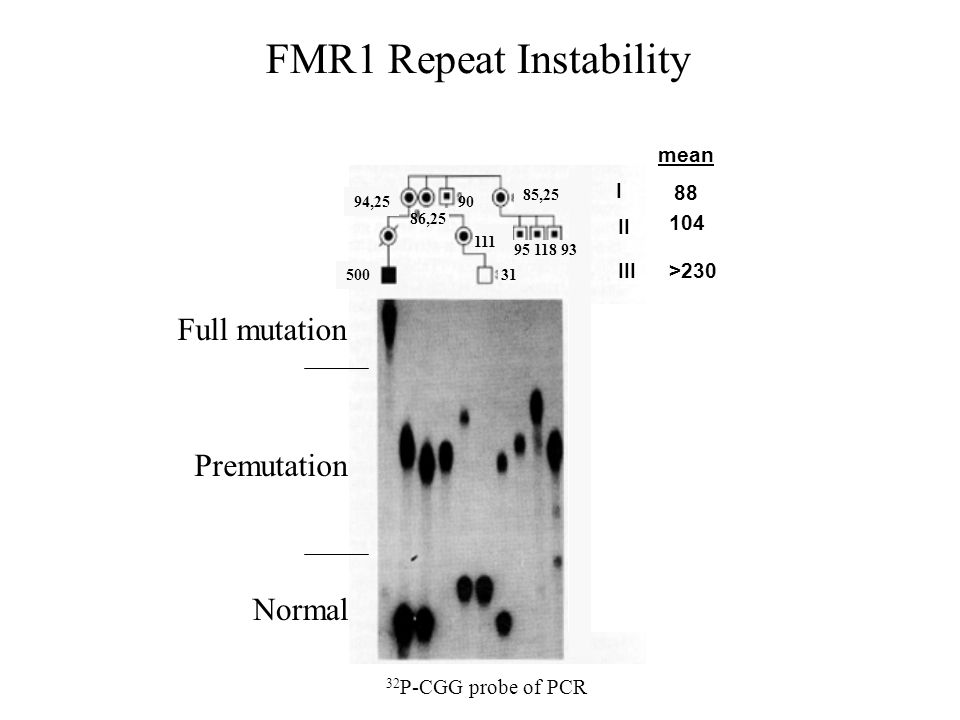 FMR1 Repeat Instability