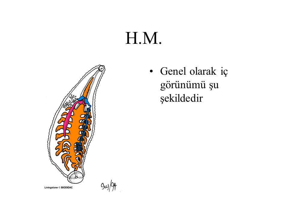 H.M. Genel olarak iç görünümü şu şekildedir