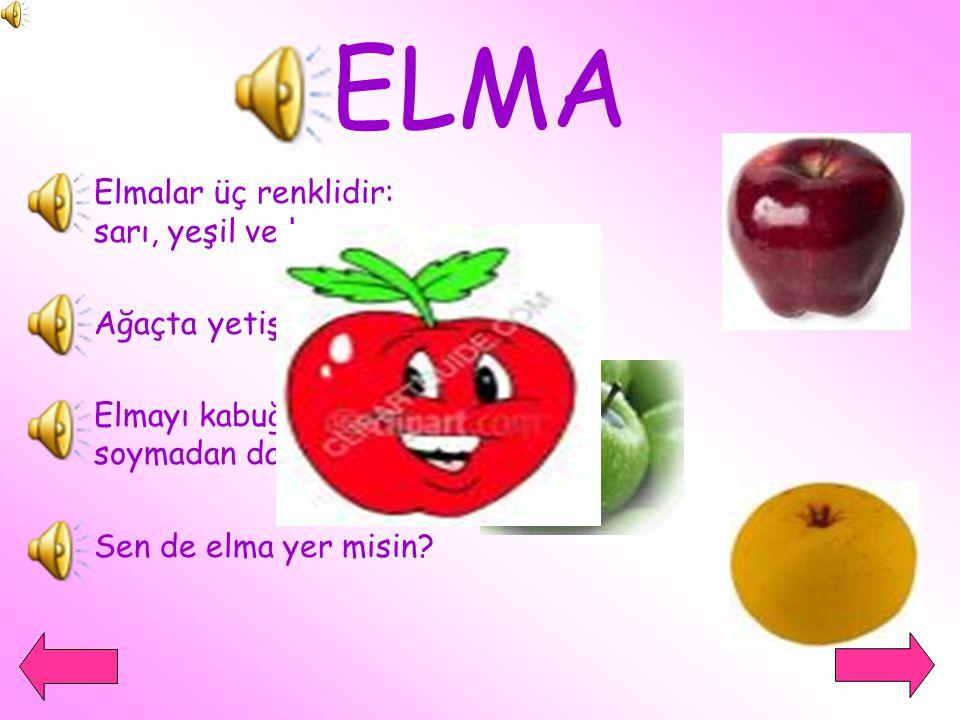 ELMA Elmalar üç renklidir: sarı, yeşil ve kırmızı. Ağaçta yetişirler.