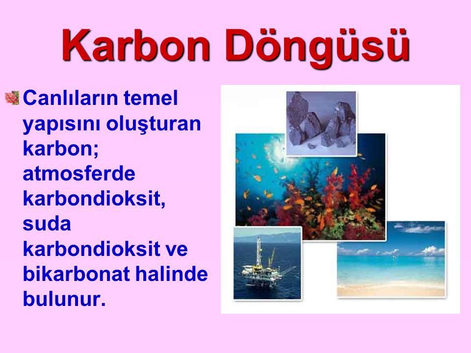 Karbon Döngüsü Canlıların temel yapısını oluşturan karbon; atmosferde karbondioksit, suda karbondioksit ve bikarbonat halinde bulunur.