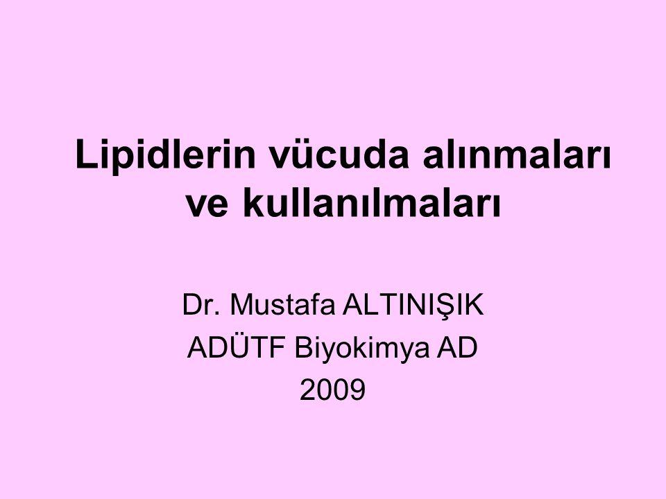 Lipidlerin vücuda alınmaları ve kullanılmaları