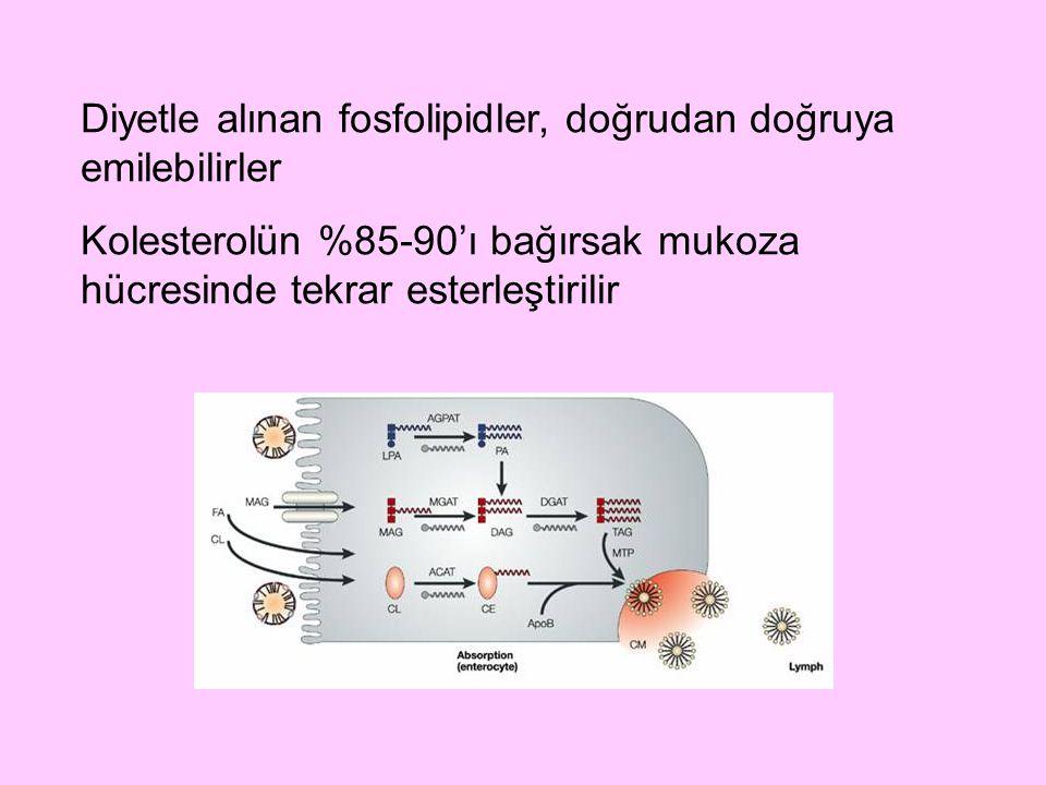 Diyetle alınan fosfolipidler, doğrudan doğruya emilebilirler