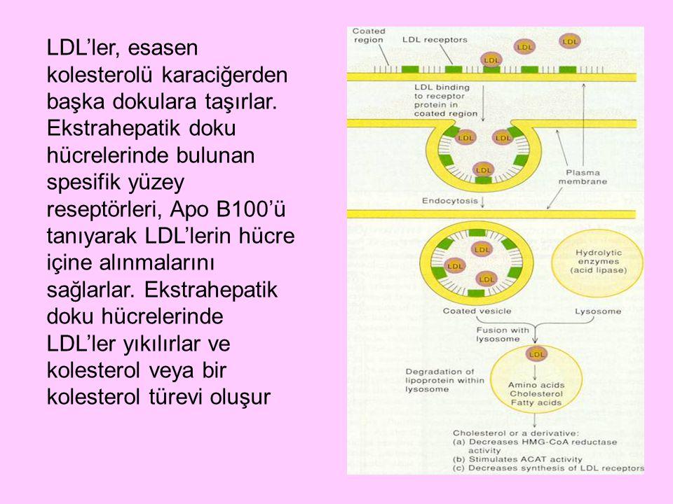 LDL'ler, esasen kolesterolü karaciğerden başka dokulara taşırlar