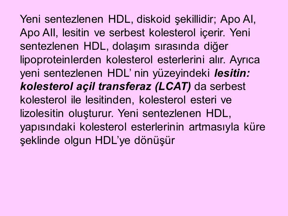Yeni sentezlenen HDL, diskoid şekillidir; Apo AI, Apo AII, lesitin ve serbest kolesterol içerir.