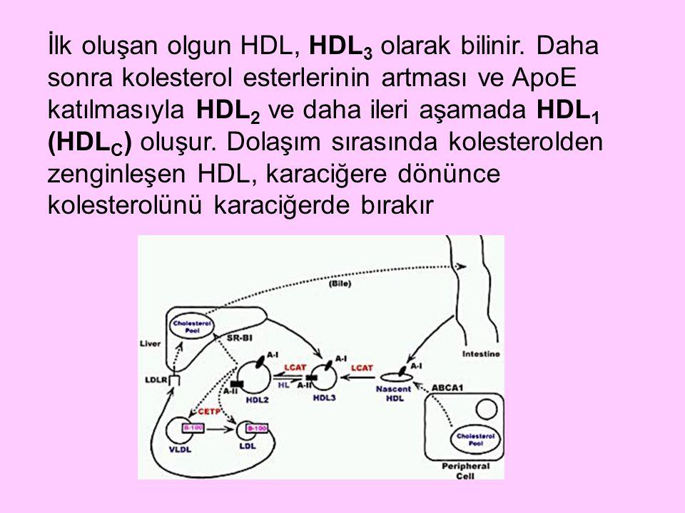 İlk oluşan olgun HDL, HDL3 olarak bilinir
