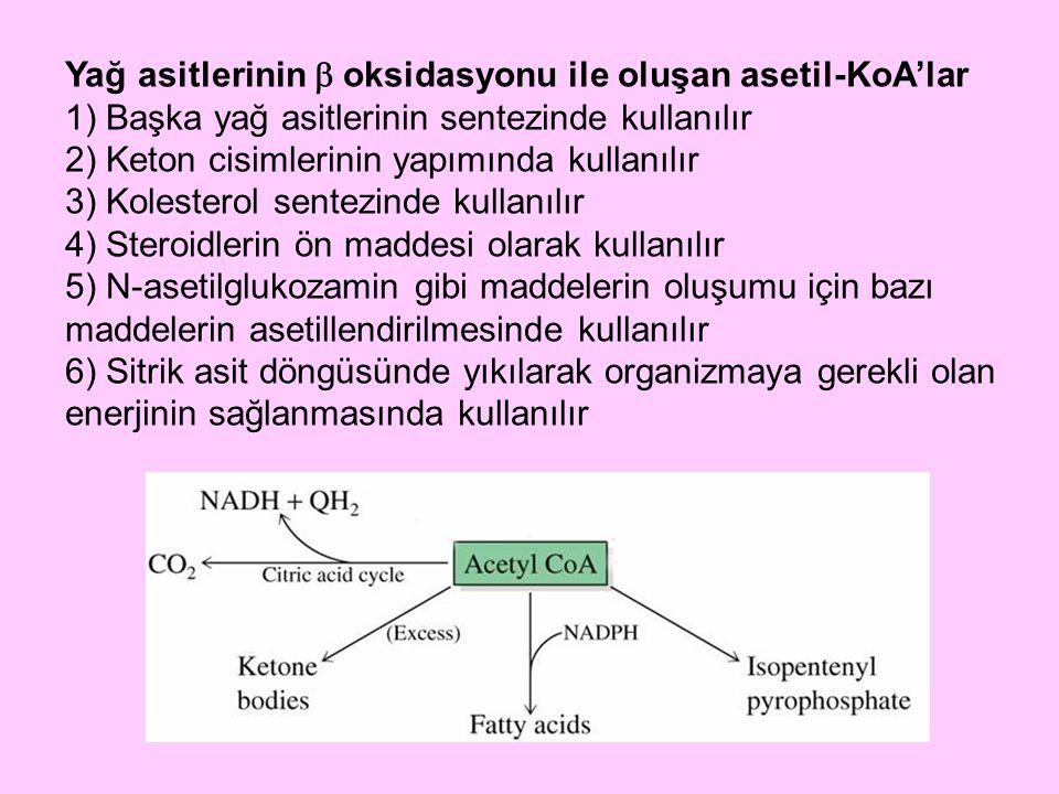 Yağ asitlerinin  oksidasyonu ile oluşan asetil-KoA'lar