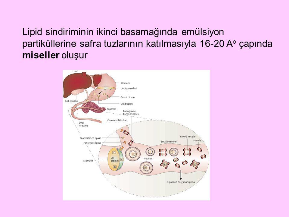 Lipid sindiriminin ikinci basamağında emülsiyon partiküllerine safra tuzlarının katılmasıyla 16-20 Ao çapında miseller oluşur