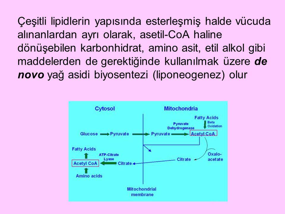 Çeşitli lipidlerin yapısında esterleşmiş halde vücuda alınanlardan ayrı olarak, asetil-CoA haline dönüşebilen karbonhidrat, amino asit, etil alkol gibi maddelerden de gerektiğinde kullanılmak üzere de novo yağ asidi biyosentezi (liponeogenez) olur