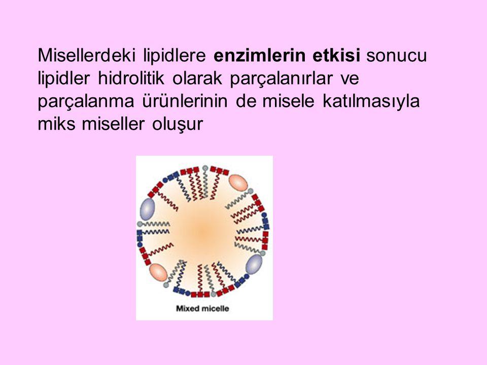 Misellerdeki lipidlere enzimlerin etkisi sonucu lipidler hidrolitik olarak parçalanırlar ve parçalanma ürünlerinin de misele katılmasıyla miks miseller oluşur