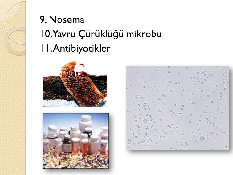 9. Nosema 10. Yavru Çürüklüğü mikrobu 11. Antibiyotikler