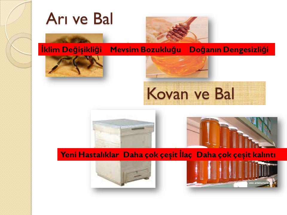 Arı ve Bal İklim Değişikliği Mevsim Bozukluğu Doğanın Dengesizliği. Kovan ve Bal.