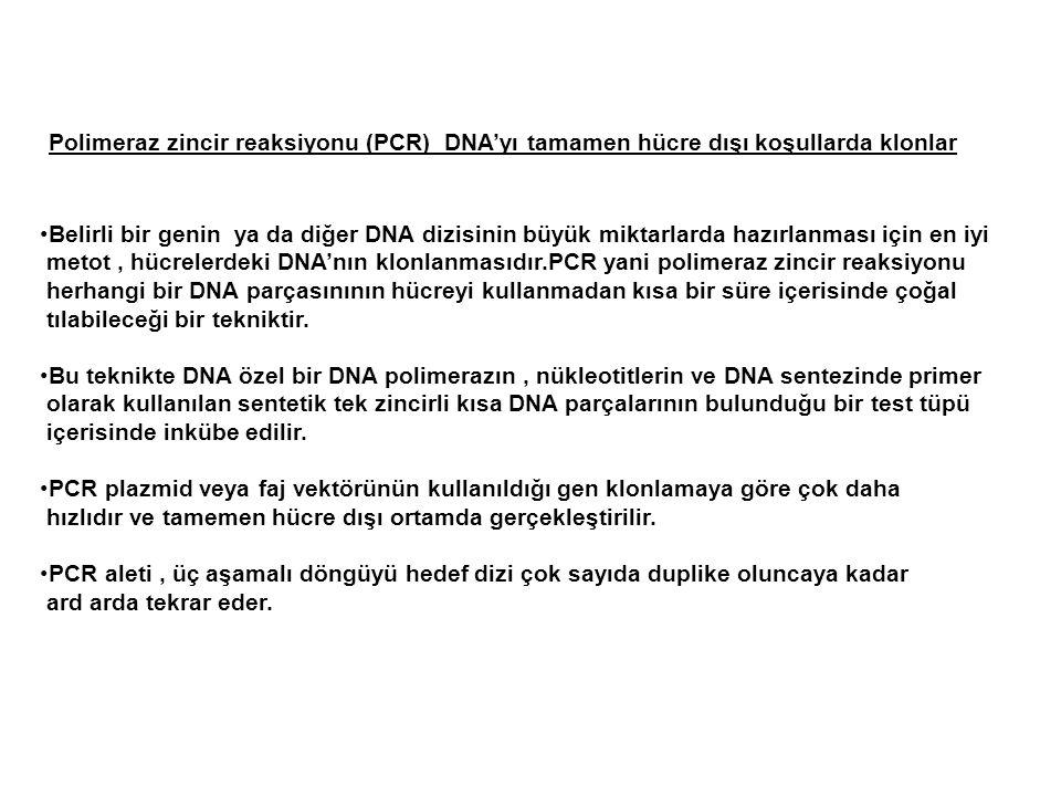Polimeraz zincir reaksiyonu (PCR) DNA'yı tamamen hücre dışı koşullarda klonlar