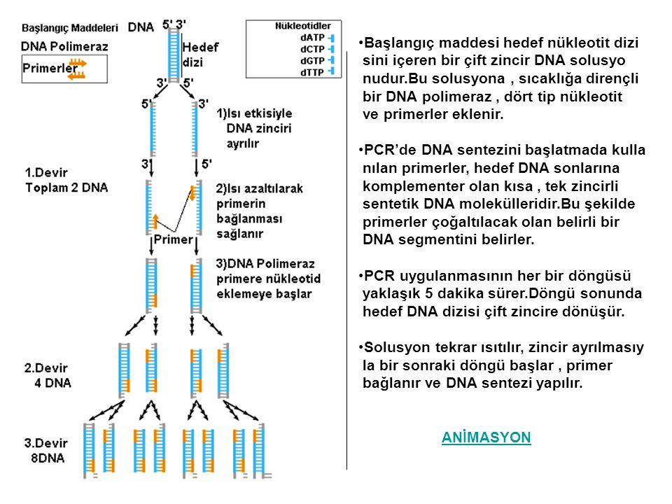 Başlangıç maddesi hedef nükleotit dizi