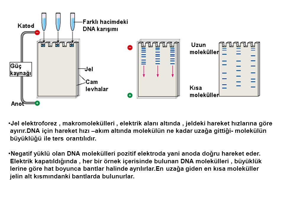Jel elektroforez , makromolekülleri , elektrik alanı altında , jeldeki hareket hızlarına göre