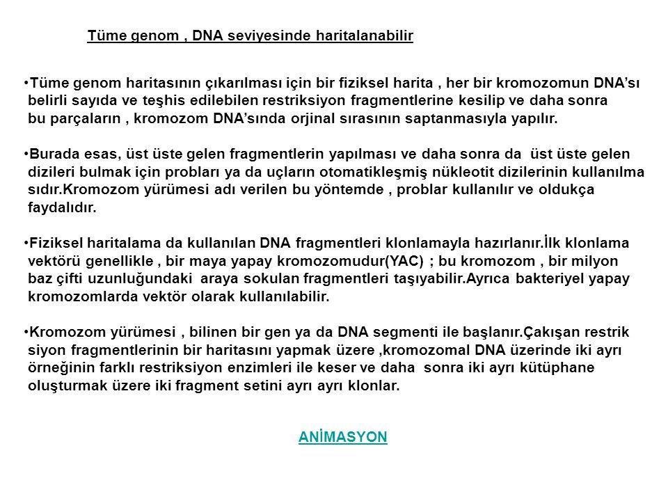 Tüme genom , DNA seviyesinde haritalanabilir