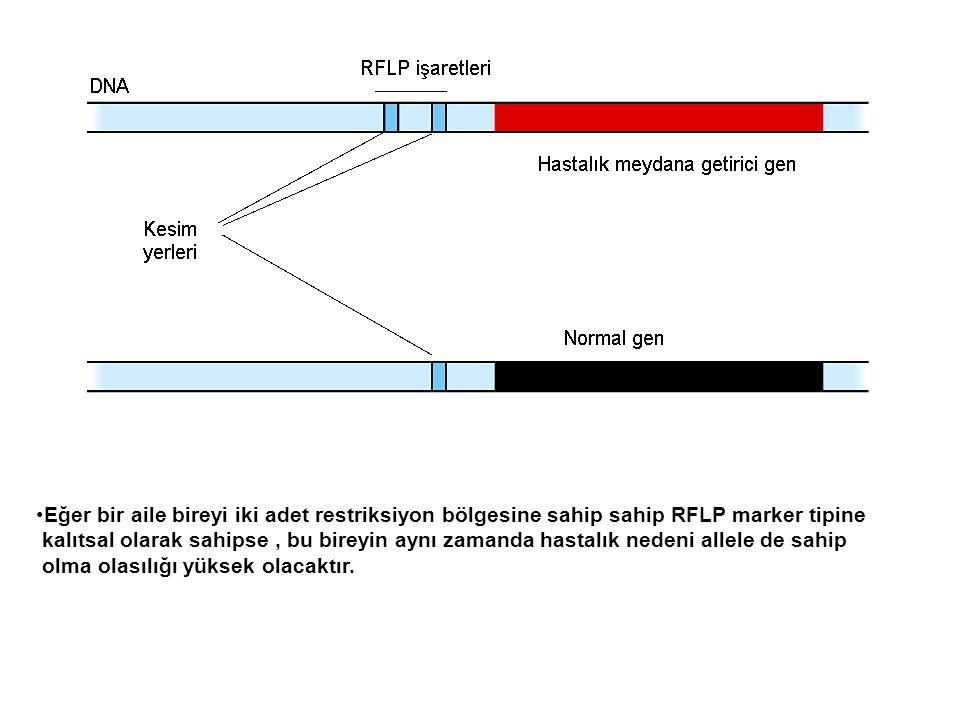Eğer bir aile bireyi iki adet restriksiyon bölgesine sahip sahip RFLP marker tipine