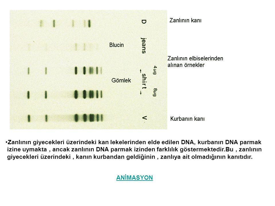 Zanlının giyecekleri üzerindeki kan lekelerinden elde edilen DNA, kurbanın DNA parmak