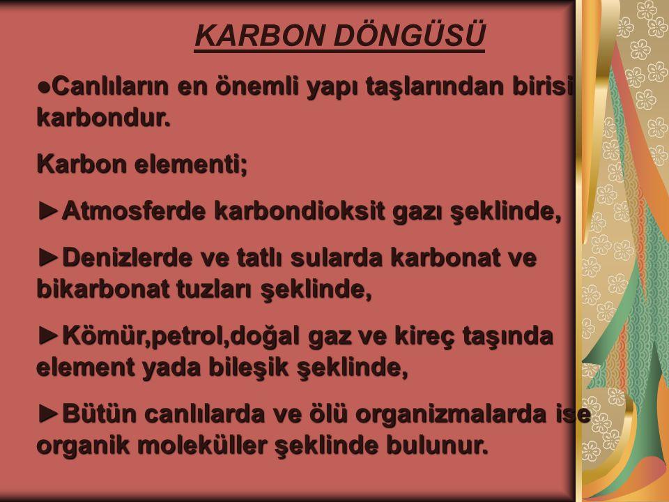 KARBON DÖNGÜSÜ ●Canlıların en önemli yapı taşlarından birisi karbondur. Karbon elementi; ►Atmosferde karbondioksit gazı şeklinde,