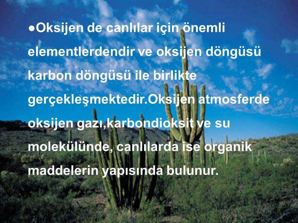 ●Oksijen de canlılar için önemli