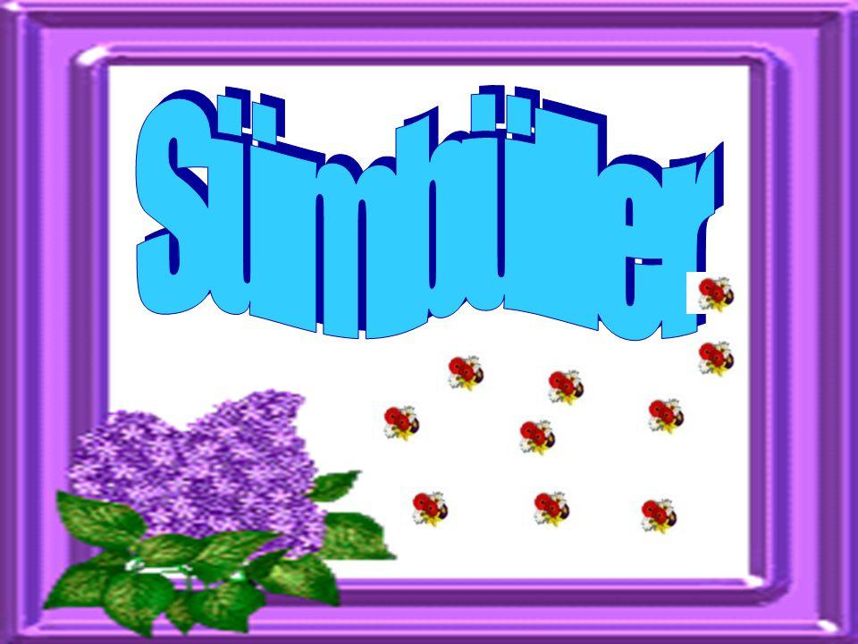 Sümbüller