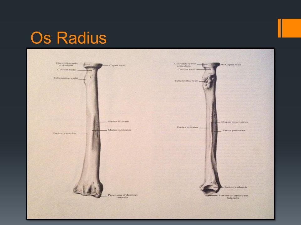 Os Radius