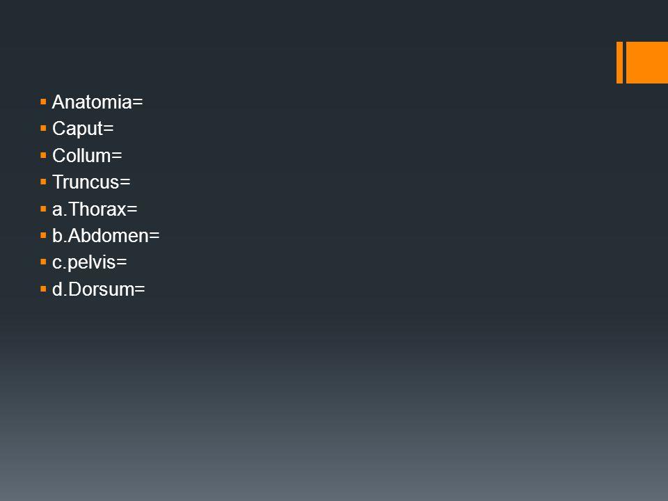 Anatomia= Caput= Collum= Truncus= a.Thorax= b.Abdomen= c.pelvis= d.Dorsum=