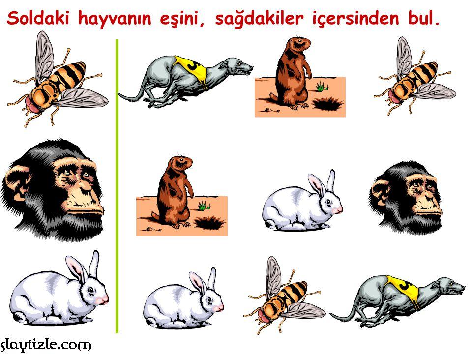 Soldaki hayvanın eşini, sağdakiler içersinden bul.