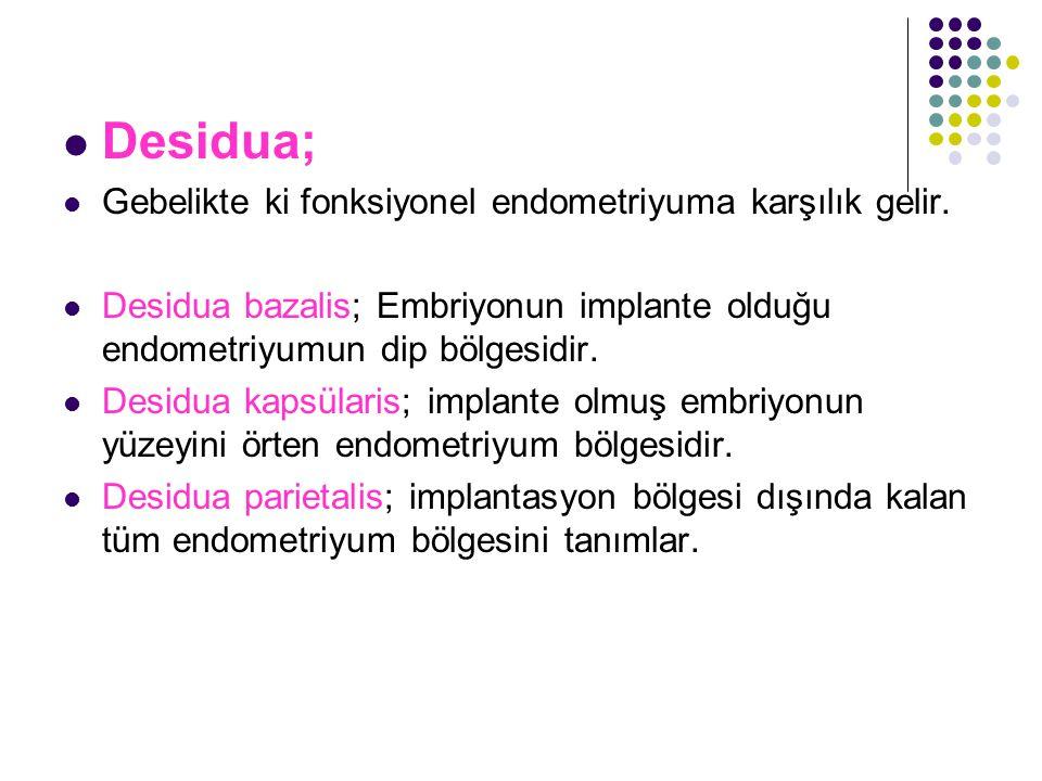 Desidua; Gebelikte ki fonksiyonel endometriyuma karşılık gelir.