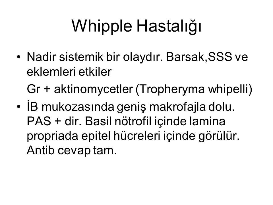 Whipple Hastalığı Nadir sistemik bir olaydır. Barsak,SSS ve eklemleri etkiler. Gr + aktinomycetler (Tropheryma whipelli)