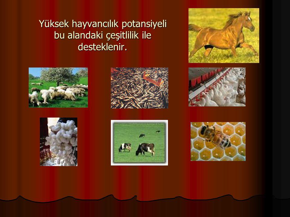 Yüksek hayvancılık potansiyeli bu alandaki çeşitlilik ile desteklenir.