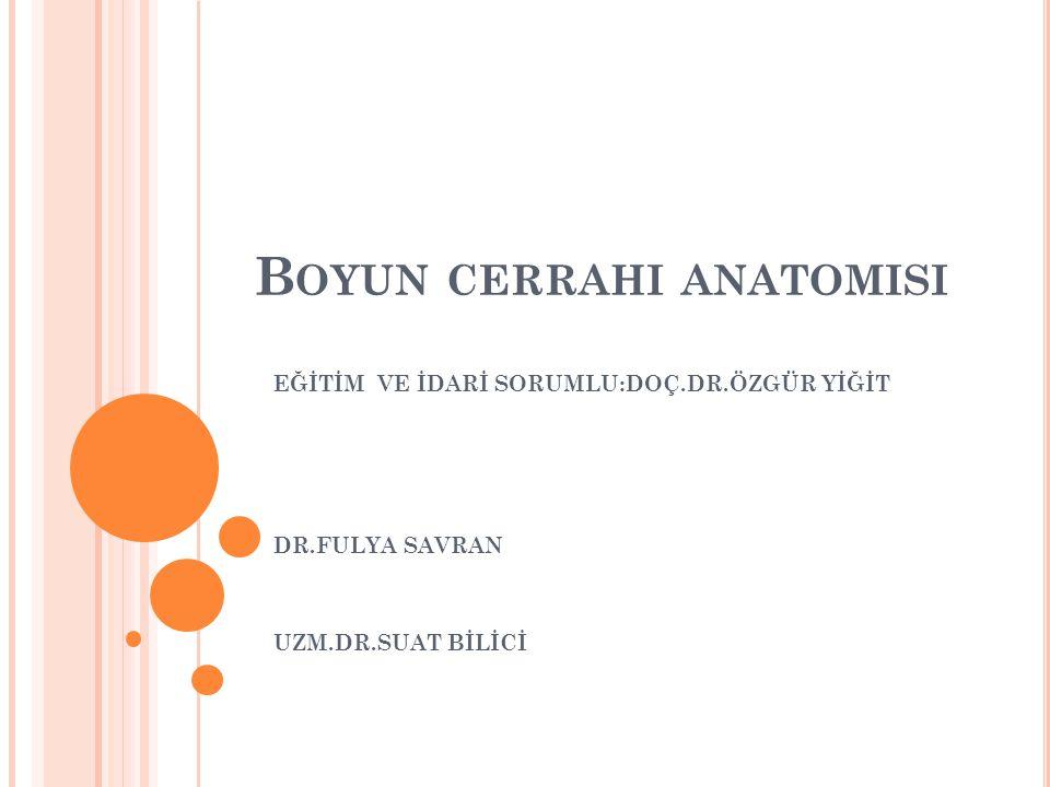 Boyun cerrahi anatomisi