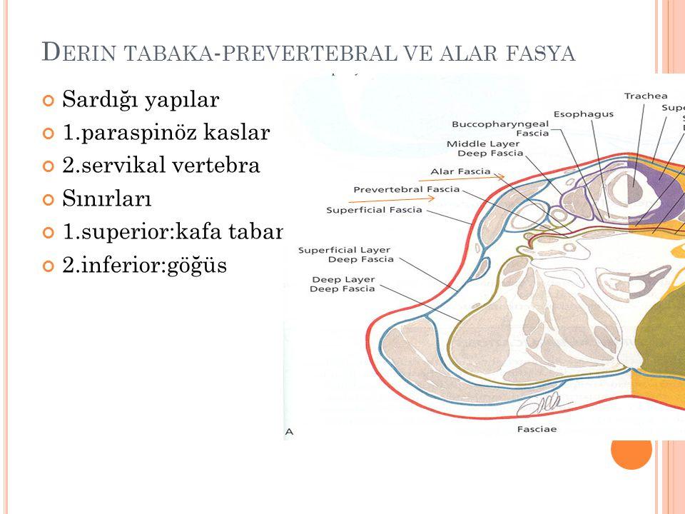 Derin tabaka-prevertebral ve alar fasya