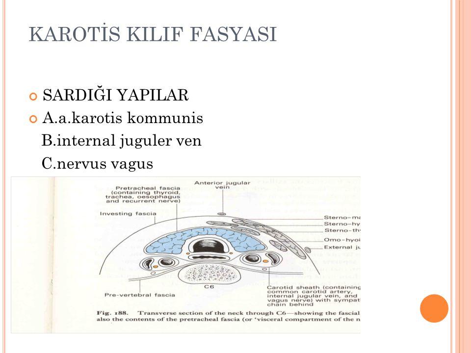 KAROTİS KILIF FASYASI SARDIĞI YAPILAR A.a.karotis kommunis