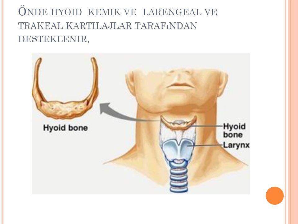 Önde hyoid kemik ve larengeal ve trakeal kartilajlar tarafından desteklenir.