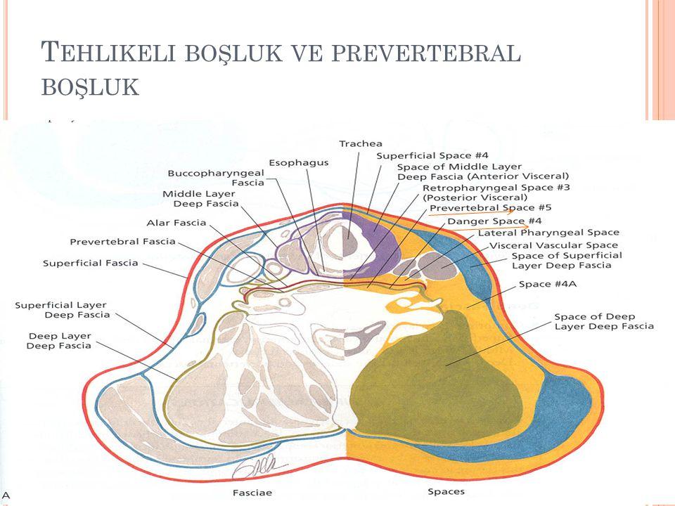 Tehlikeli boşluk ve prevertebral boşluk