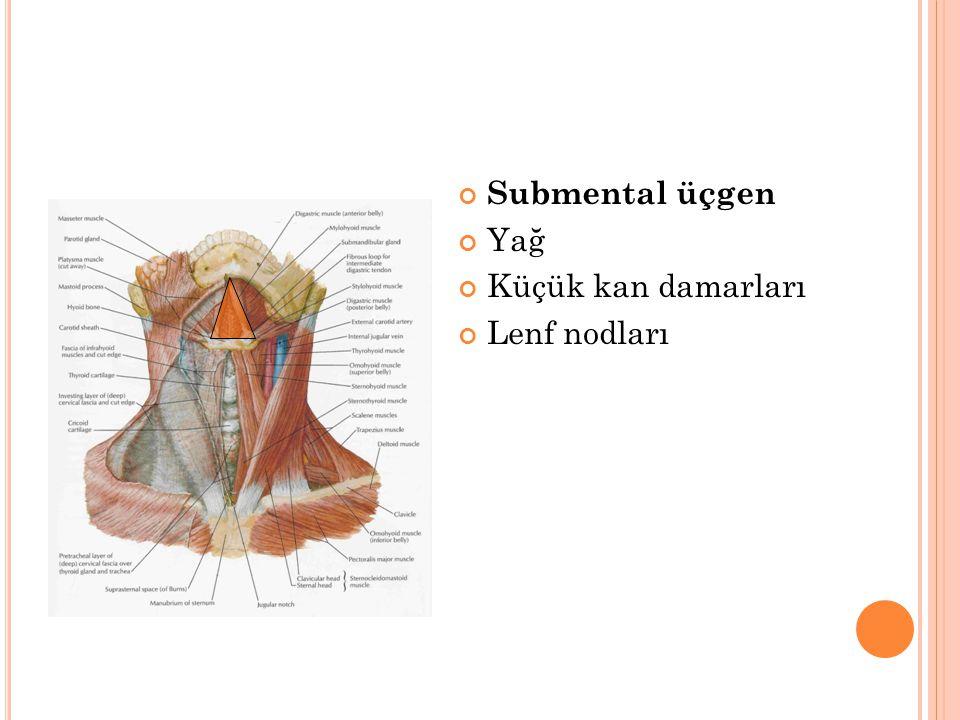 Submental üçgen Yağ Küçük kan damarları Lenf nodları