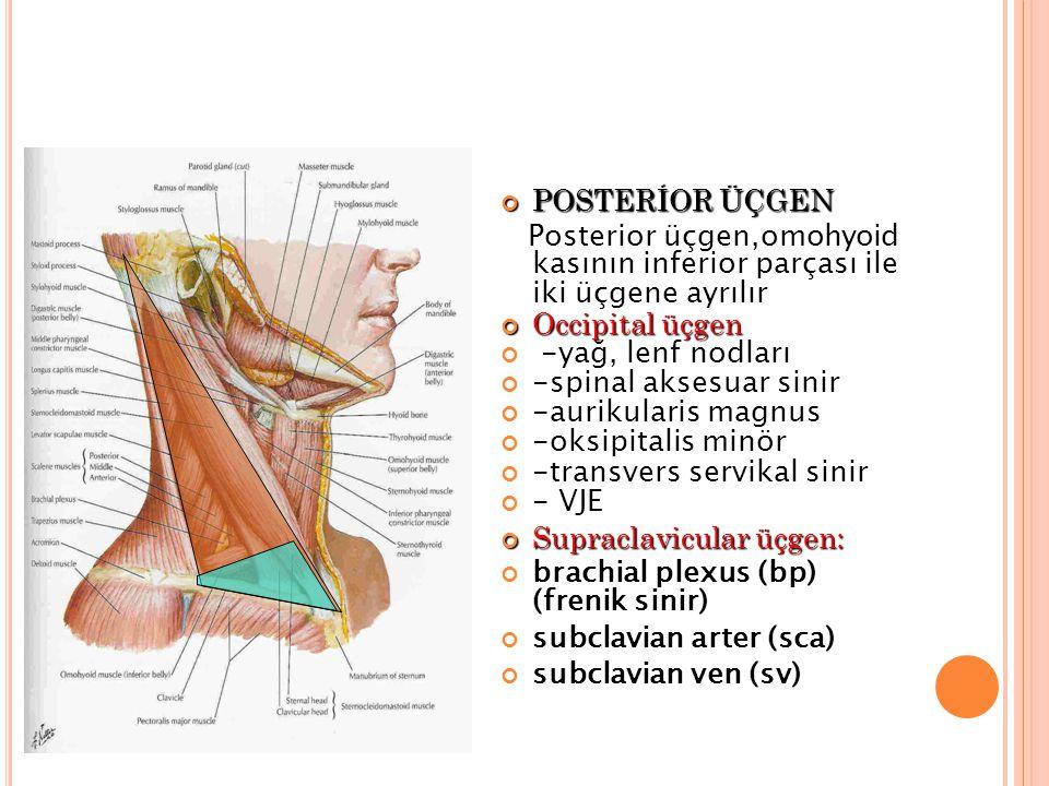 POSTERİOR ÜÇGEN Posterior üçgen,omohyoid kasının inferior parçası ile iki üçgene ayrılır. Occipital üçgen.