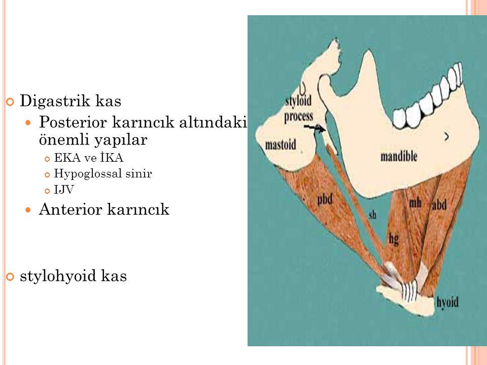 Posterior karıncık altındaki önemli yapılar