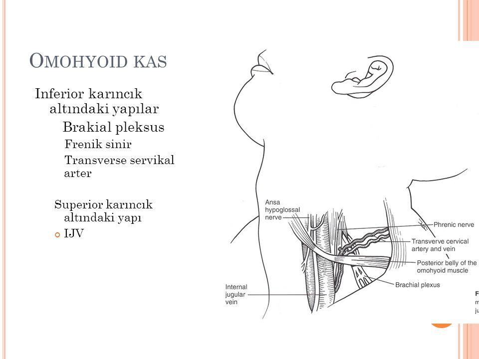 Omohyoid kas Inferior karıncık altındaki yapılar Brakial pleksus