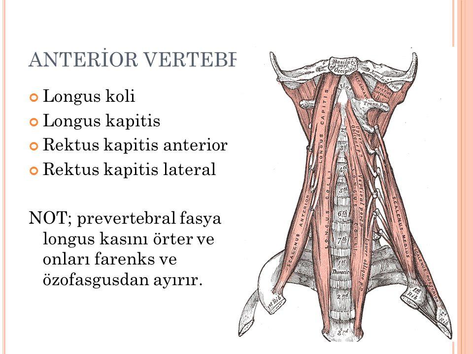 ANTERİOR VERTEBRAL KASLAR