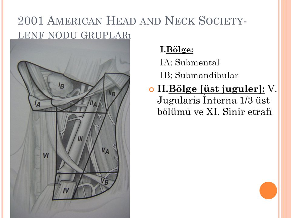 2001 American Head and Neck Society-lenf nodu grupları