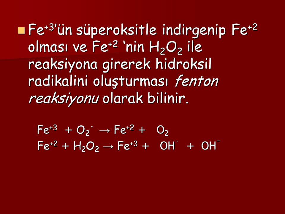 Fe+3'ün süperoksitle indirgenip Fe+2 olması ve Fe+2 'nin H2O2 ile reaksiyona girerek hidroksil radikalini oluşturması fenton reaksiyonu olarak bilinir.