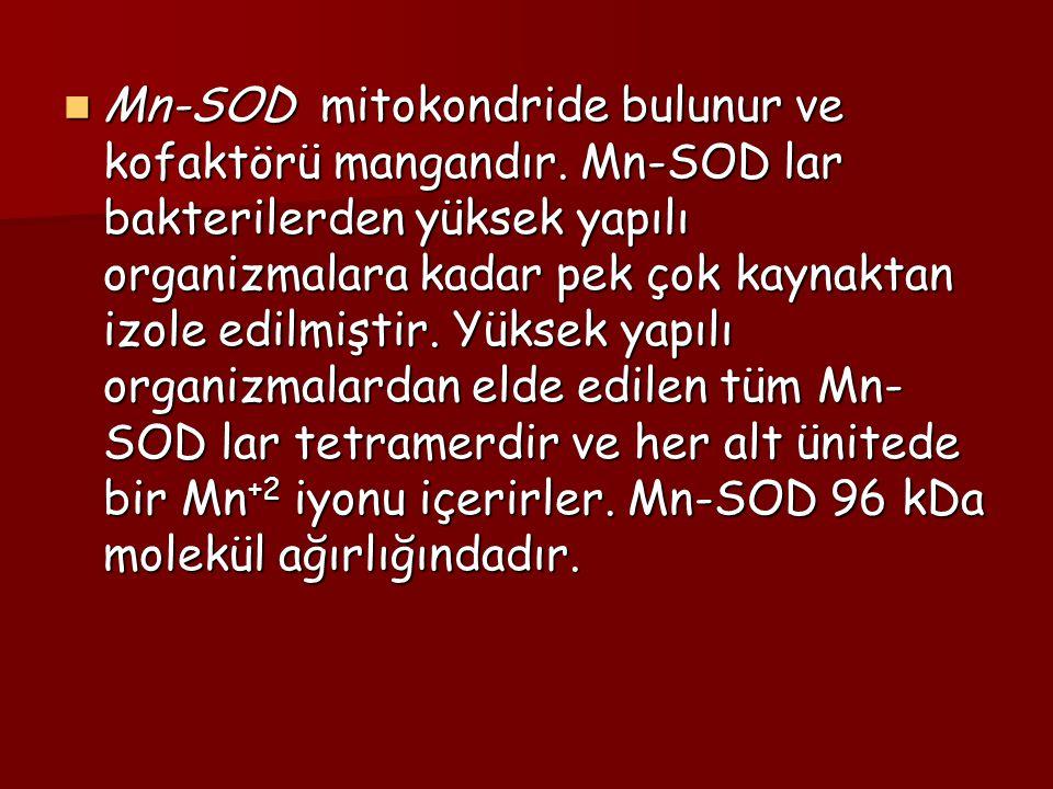 Mn-SOD mitokondride bulunur ve kofaktörü mangandır